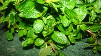 How To Dry Fresh Mint (Homemade) Recipe